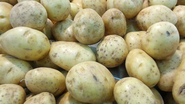 Budidaya kentang dataran tinggi