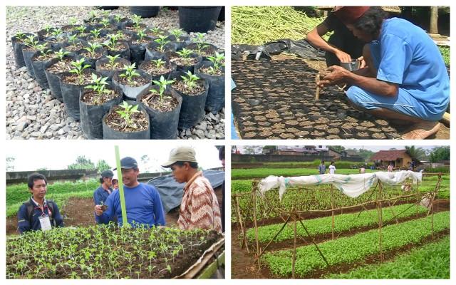Membuat media persemaian untuk tanaman hortikultura