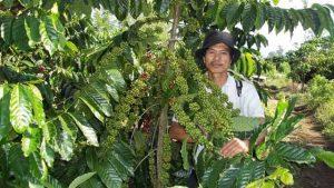 Mengenal jenis tanaman kopi