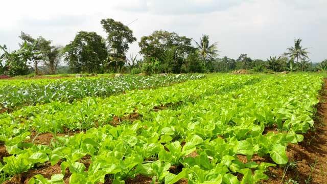 Panduan dasar pertanian organik