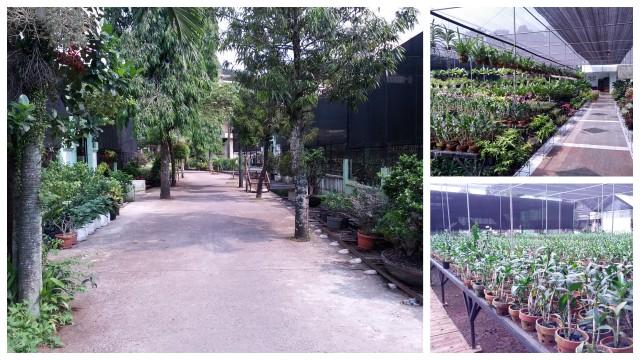 Menengok kembali Taman Anggrek Ragunan