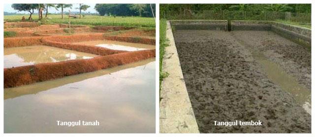Persiapan kolam tanah