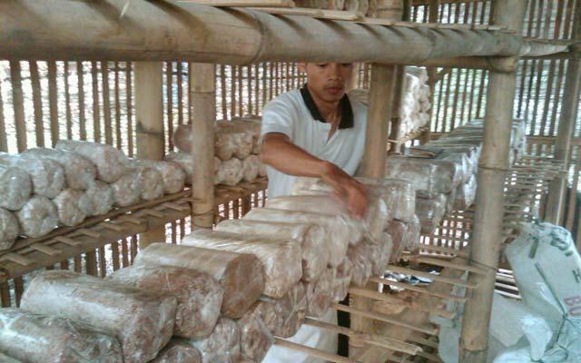 Jamur Tiram, Bisnis Rumahan Yang Menggiurkan