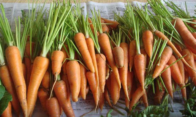 Manfaat wortel dan terapi jus wortel