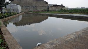 Kolam tembok untuk budidaya ikan
